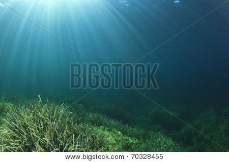 Underwater ocean background with seaweed