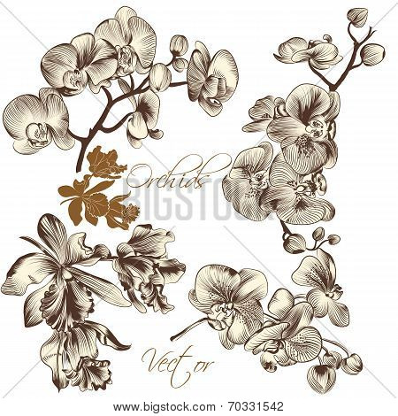Collection Of High Detailed Vector Orchid Flowers