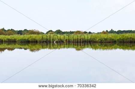 Grey Heron And Green Coast Of Briere Marsh, France