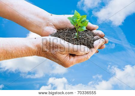Farmer Hands With Handful Soil And Green Sprout