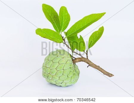 Sugar Apples Or Annona Squamosa Linn