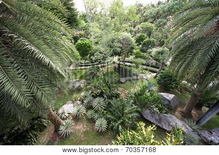 A view from above on to tropical meadow with plants in the Nong Nooch tropical botanic garden near P