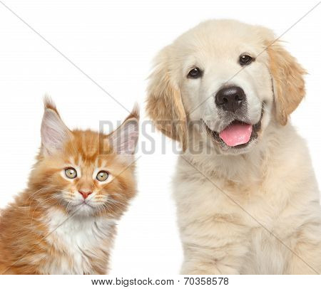 Close-up Portrait Of Cat And Dog In Front Of White Background