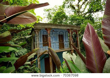 Abandoned House In The Jungle