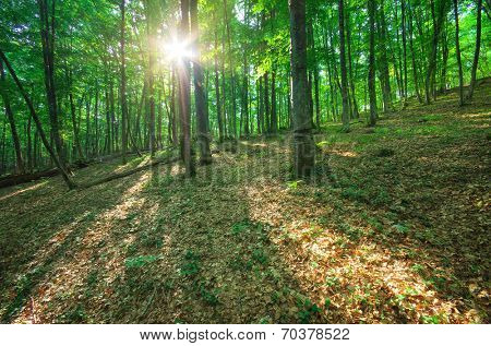 Sunlight in forest. Nature compositon.