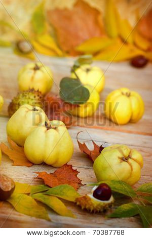 Organic quince