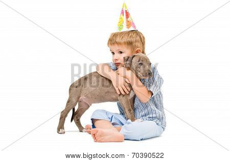Friendly embrace the boy and pitbull puppy