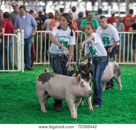 Teens With Pigs At Iowa State Fair