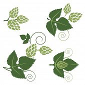 pic of hop-plant  - stylized hop elements for your designs - JPG