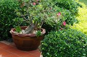 picture of planters  - Ceramic planter with pink flowers on summer patio - JPG