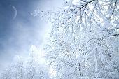 stock photo of sleet  - Winter - JPG