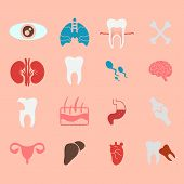 stock photo of internal organs  - icons of internal human organs Flat design - JPG