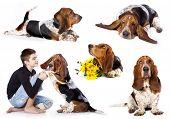 image of basset hound  -  Basset hound and boy - JPG