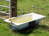 foto of trough  - close bath for drinking trough for cows - JPG