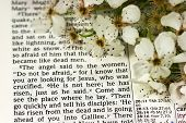 stock photo of risen  - This photo depicts a Bible page with the good news that He has risen - JPG