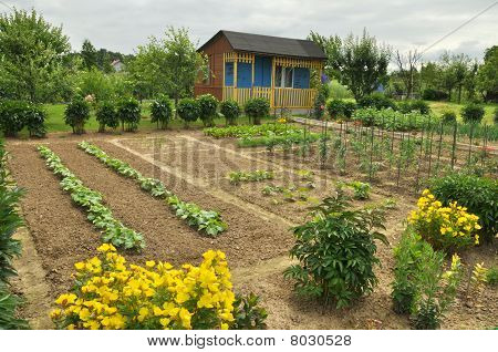 Cottage And Vegetable Garden