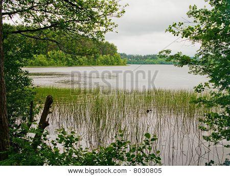 Lake At The Rainy Day.