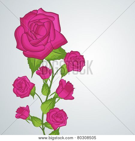Beautiful blooming pink roses with leaves and buds on blue background.