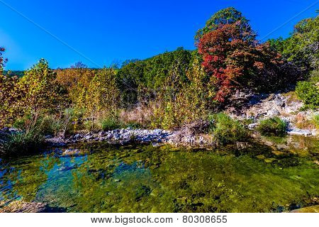 Bright Beautiful Fall Foliage On A Stunning Maple Trees In Lost Maples State Park, Texas