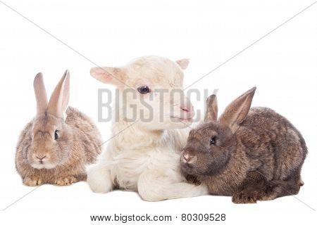 Lamb and rabbits