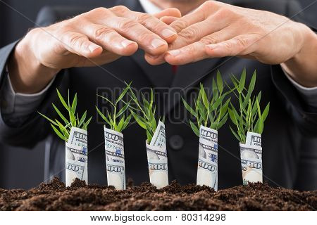 Businessman Protecting Sapling Covered With American Dollars