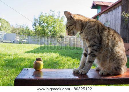 Cat Delicious