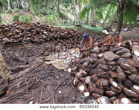 Shucking coconuts