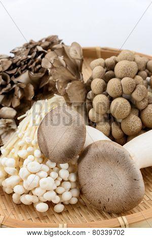 Assorted Of Mushrooms