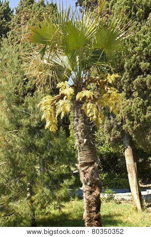 Palm In Park