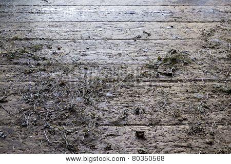 Wooden floor with remnants of hay