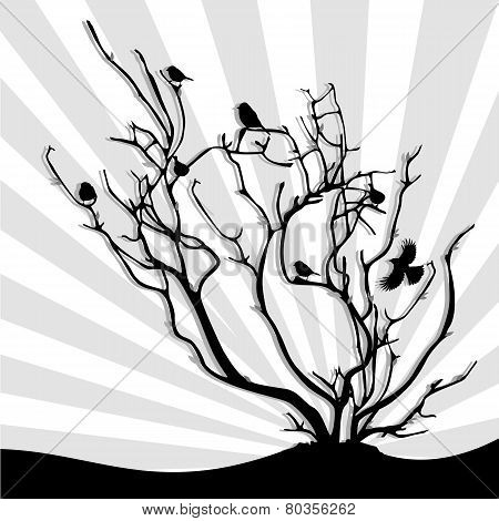 birds on the branches