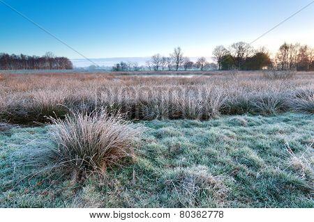 Morning Frost On Marsh In Winter