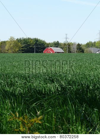 Red barn and green cornfield, near Stratford, Ontario, Canada