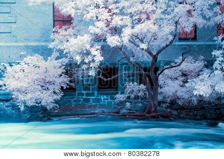 Fast Flowing River And Tree In Infrared