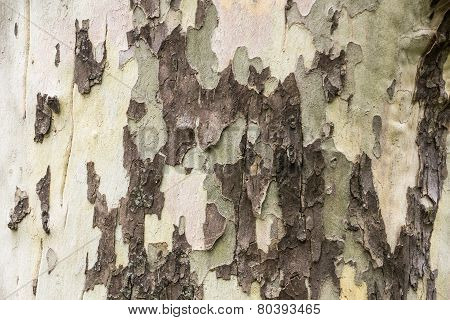 Colorful Bark