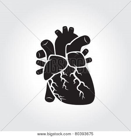 Heart Anatomy Symbol