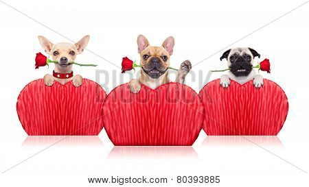 Valentines Dogs