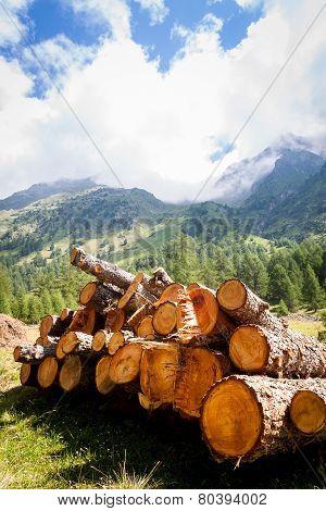 Logs And Panorama