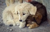picture of homeless  - portrait of the small homeless puppies outdoors - JPG