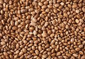 foto of pinto bean  - Red pinto beans close up for food background - JPG