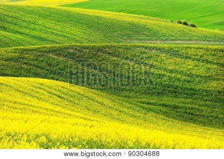 Rape field waves, South Moravia, Czech Republic