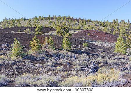 New Vegetation On A Volcanic Landscape