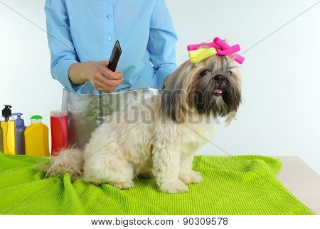 Cute Shih Tzu and hairdresser in barbershop isolated on white
