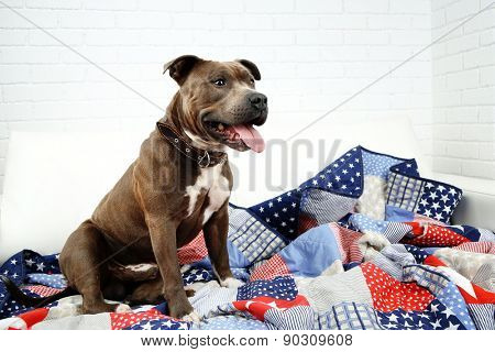 Cute dog sitting on sofa, on home interior background