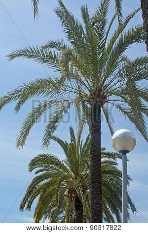 Palm trees and street light