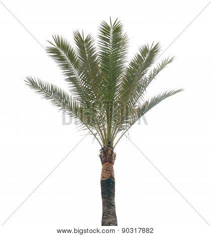 Palm tree and white sky