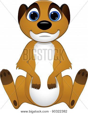 Cute baby meerkats
