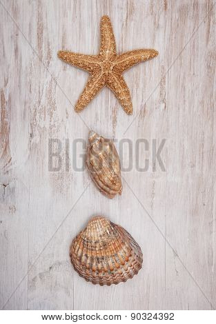 Seashells On The Old Shabby Chic Wood Background