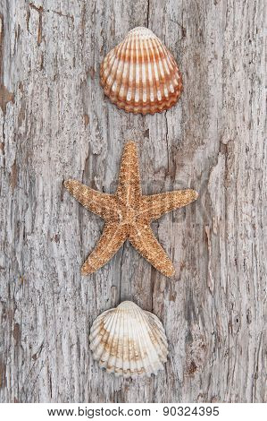 Seashells On The Old Shabby Chic Wood