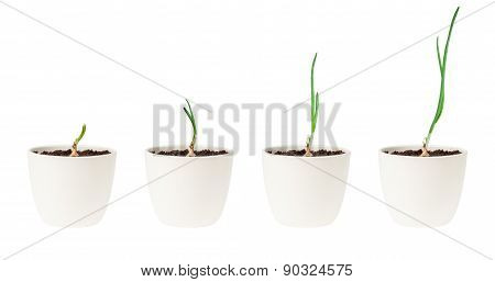 Growing plant in pots, on white.